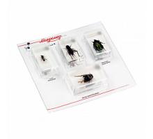 Набор насекомых в акриле Микромед
